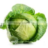 Fresh Indain Cabbage Directly from Farm