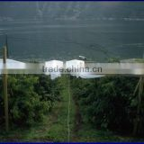 cherry and grape orchard HDPE polytex rain protection cover agricultural textile/horticulture /gardening