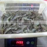 assured quality frozen Vannamei shrimp from China competitive price