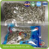 Best selling food China origin dried BABY ANCHOVY fish