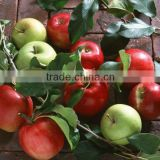 Fresh Apple Turkish Red Delicious Apple Starking Delicious Apple Golden Delicious Apple