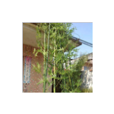 artificial new design and high simulation green bamboo tree for home decoration
