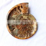 ashtray ammonite fossils stone for sale