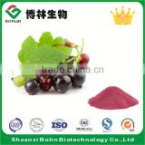 2016 Hot Selling Bulk Fresh Black Currant Fruit Powder Black Currant Flavor Powder for Fruit Drink