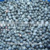 Frozen style blueberry cultivated