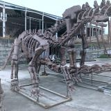 Man-made dinosaur fossil skeleton model