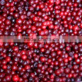 Good quality IQF frozen lingonberry red and delicious berry
