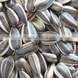 Fresh Style and Raw Processing Type Chinese sunflower seeds