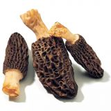 High Quality Morchella Vulgaris