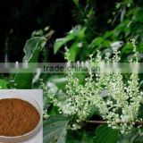 Very hot selling used for treating blood vessel disease Polygonum Cuspidatum Extract Resveratrol by HPLC