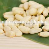 High Quality Pine Nut Kernels for Deep Using