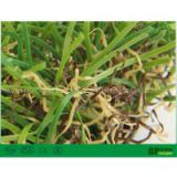 green carpet garden turf plastic grass squares