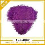 Decorative Colorful Ostrich Feather for Sale