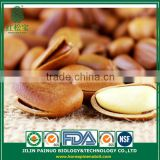 Continous Supply New Crop Raw and Roast Siberian Open Pine Nuts in Shell