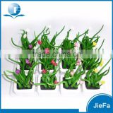 artificial mini potted succulent plant for home decorations / garden decorations