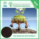 Blackant extract Powder,black Polyrachis ant extract powder,Polyrhachis ant extract with super quality and low price
