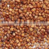 Chinese Red sorghum with best quality Sorghum