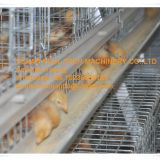 Iran Chicken Shed A Type Automatic Small Chicken Cage & Pullet Cage with 5000 Chicks with Nipple Drinker & Feed Trough for Poultry Farming