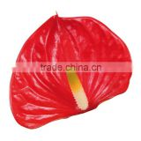 Anthurium Flower & Plants