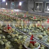 Goldenest China manufacturer automatic chicken farming equipment for broilers layer good price JCJX-1
