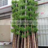 high quality outdoor cheap real trunk lucky bamboo artificial bamboo/ decotative fake bamboo on sale                                                                         Quality Choice