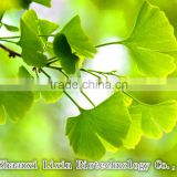 Herbal Extract Hot Selling Best Quality Ginkgo biloba extract Powder,ginkgo biloba capsules