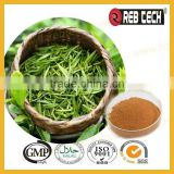 100% Herb extract Camellia Sinensis Leaf
