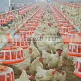 High quality poultry farm equipment automatic chicken feeding for broiler feeding system