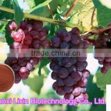 professional plant extract manufacturer grape seed extract 95% OPC/Proanthocyanidins strong antioxidant capsules with low price