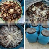 new crop dried shitake mushroom for sale 50KG A10 800G 400G 284G 184G 1700ML 720ML 580ML 370ML 314ML