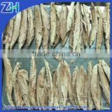 China frozen cooked skipjack tuna loins for can