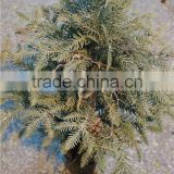 best place to buy an artificial christmas tree high quality fake Christmas tree