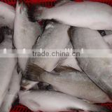 FROZEN ASIAN SEA BASS wholesale food prices