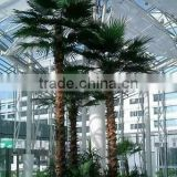 decorative indoor outdoor home garden artificial Palm tree plastic palm tree