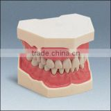 Inquiry About low price good quality plastic teeth model hot sale dental material