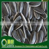 2014 Crop (24/64 280pcs/50GM) Sunflower Seeds Bulk Chinese Supplier For Human Consumption