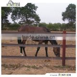 High brand Plastic PE horse rail fence manufacturer