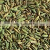 hot sale fennel seed extract