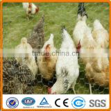 PVC coated Galvanized Hexagonal Wire Mesh for poultry Cage
