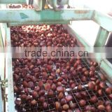 price chestnut; raw fresh good chestnuts exported to Turkey;great ability of stock a lot.