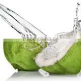 fresh coconut water/coconut drink for export - Rosun Natural Products Pvt Ltd INDIA
