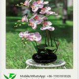 46cm Artificial Orchid Flower in Ceramic Pot