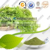 Bulk price moringa leaf powder price moringa leaf powder price