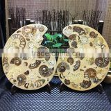 Natural Ammonite Fossils Specimen Crystal Craft For Sale