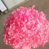 Hot Sale Natural Preserved Hydrangea Flowers for Events Decor