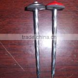 BWG9*2.5'' and 9G*2.5'' galvanized roofing nails for Kenya & Turkey market