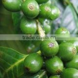 First grade Green Coffee Bean Extract Bulk powder                                                                         Quality Choice