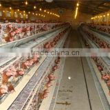 High quality prefabricated chicken shed/poultry chicken shed/steel chicken sheds for sale
