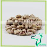 Wholesale American Round Light Speckled Kidney Beans