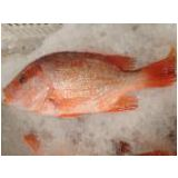 Red Drum/SNAPPER/SEA BREAM/GROUPER